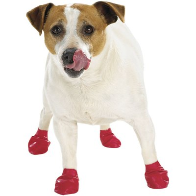 Help prevent paw injuries with protective dog booties