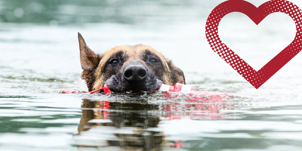 Dog in water protected from heartworm while traveling