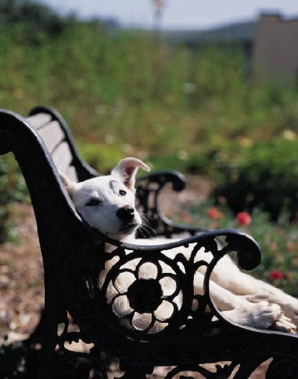 Dog takes break on bench while enjoying our dog walking wonderland