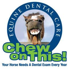 equine dental care: Your Horse needs a dental exam every year