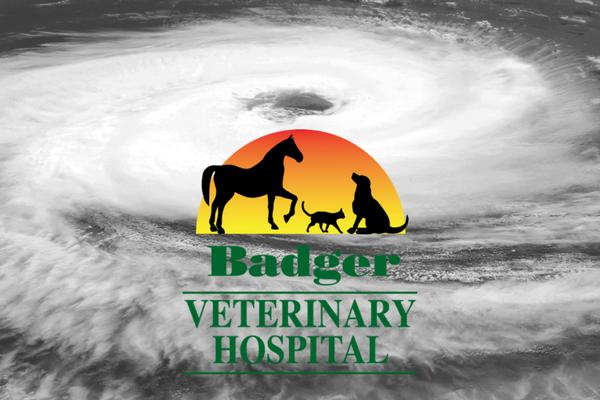 Badger Veterinary Hospital Hurricane Harvey relief efforts