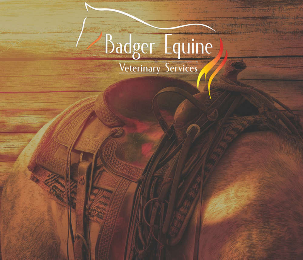 2nd Annual Badger Equine Client Appreciation Trail Ride & Cookout