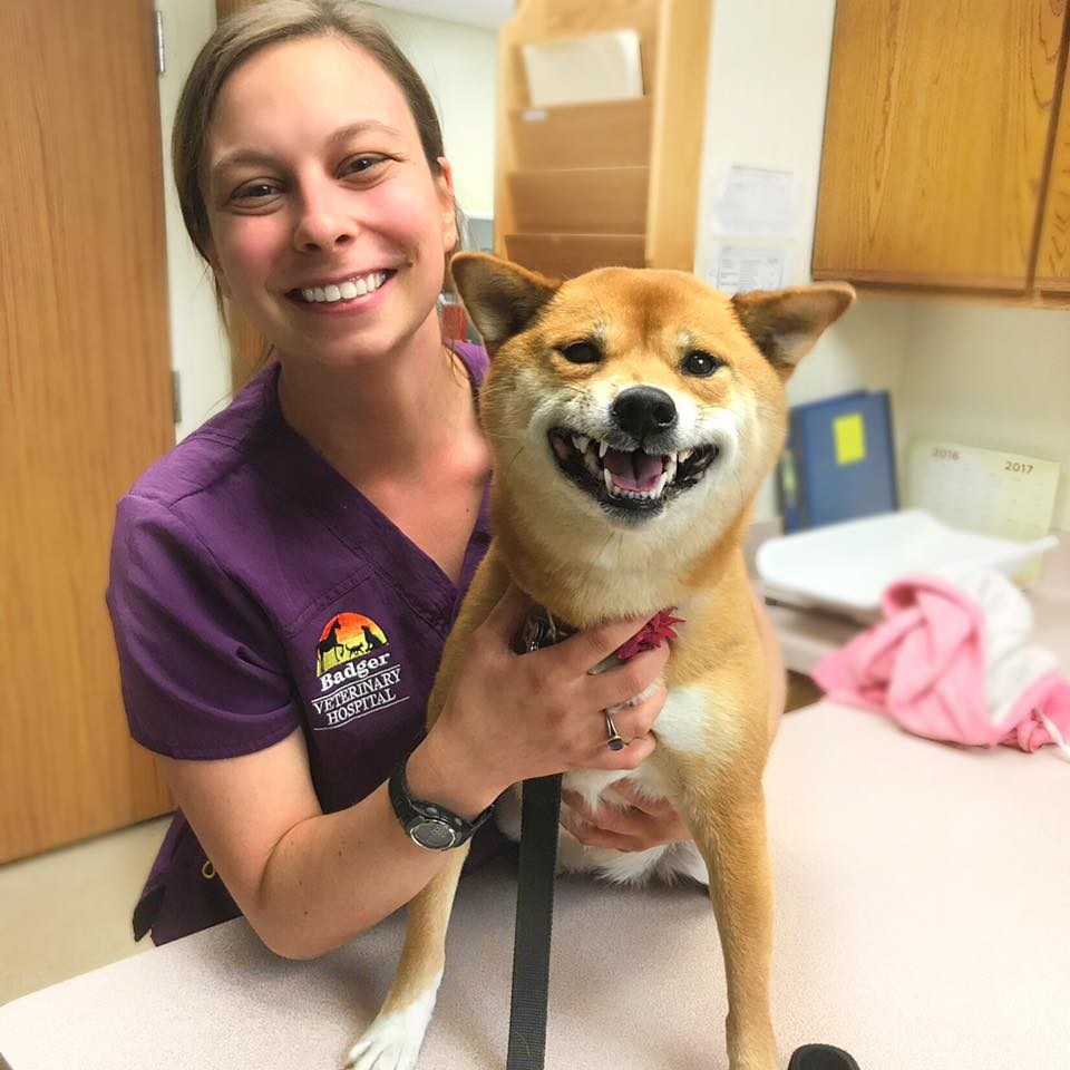 Nicole... - joined the Badger Veterinary Hospital team in January 2017. She received her Bachelor of Science in biology from Rockford College, and she became a certified veterinary technician in March 2016. She has experience working in a busy walk-in veterinary clinic as well as an emergency veterinary clinic. She continues to work as a teacher's assistant at Rockford Career College whenever she's not busy.In her spare time, Nicole enjoys cooking and baking, relaxing, and spending time with family and friends. She has an adorable brown tabby cat named Meester Glock. Fun fact: Nicole LOVES giraffes! She dreams of traveling to Giraffe Manor in Kenya someday!Practice location: Beloit