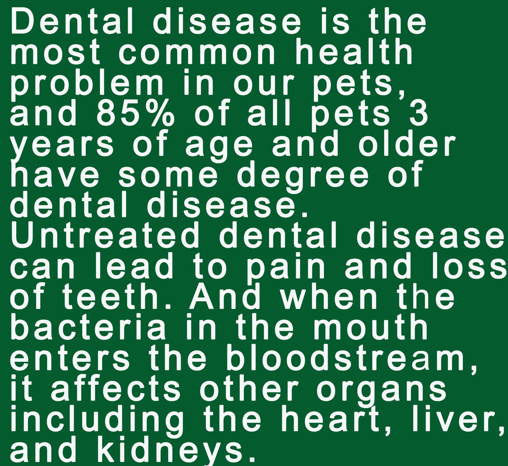 dental health 1.jpg