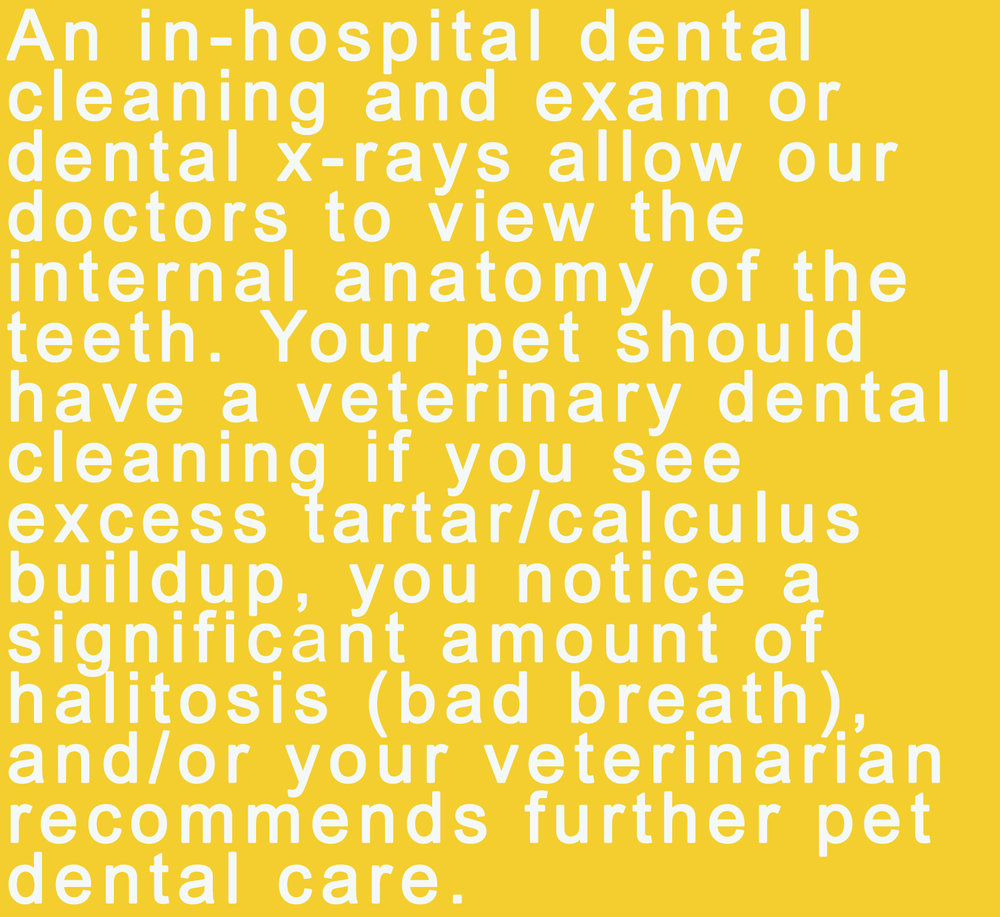 dental health 4.jpg