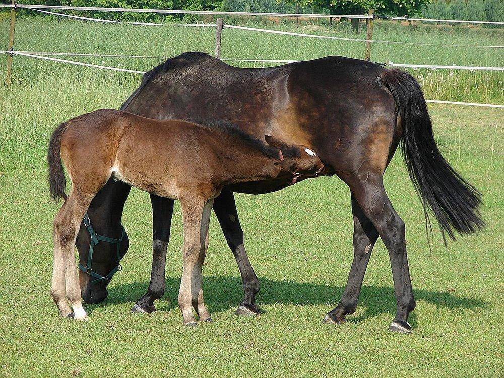 foall.jpg