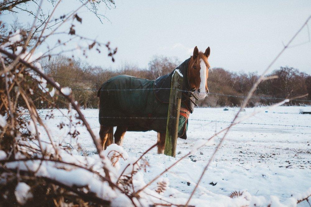 horse-2591138_1920.jpg