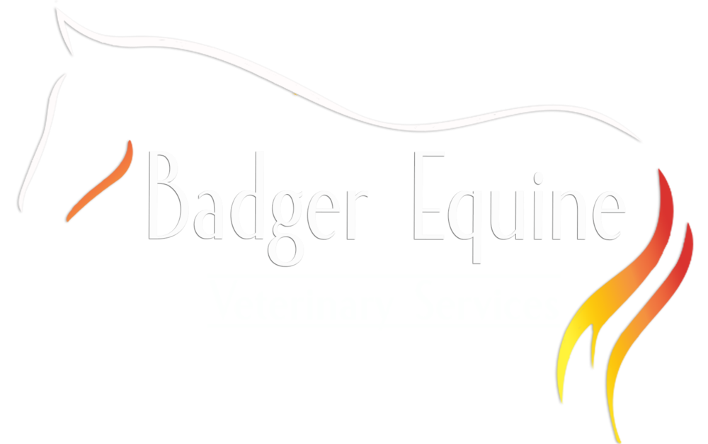 Badger Equine Logo White Topline and Text.png