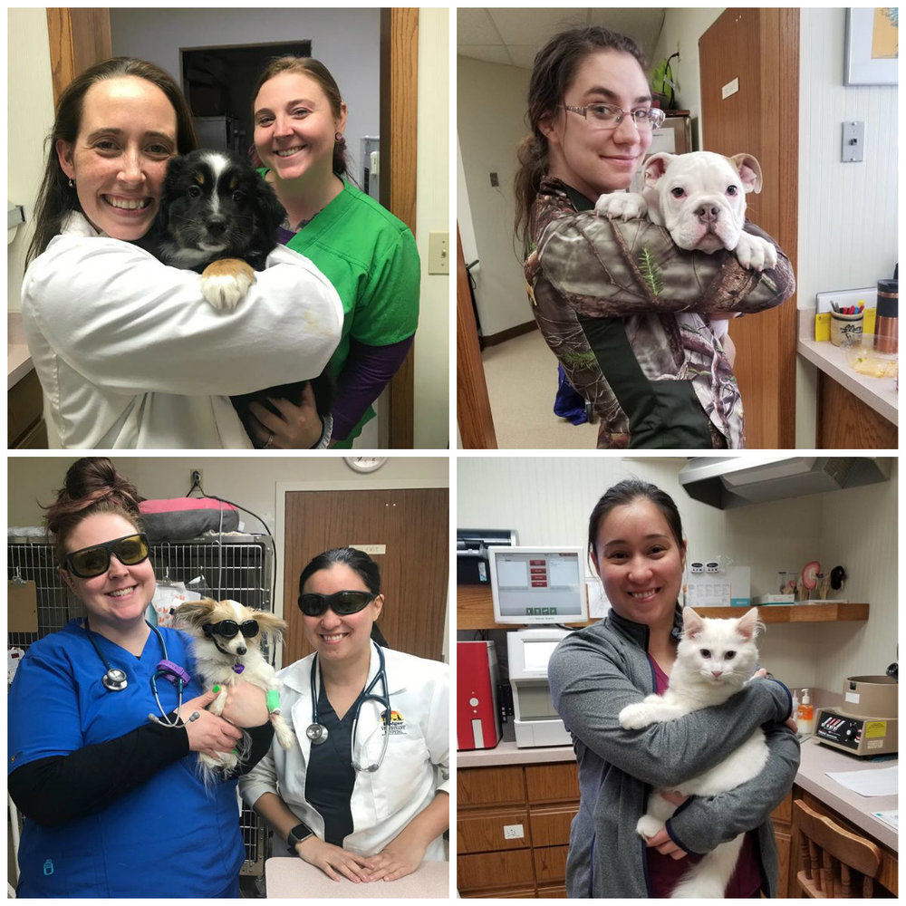 Meet our team - Dedicated to the life and love of your pet.