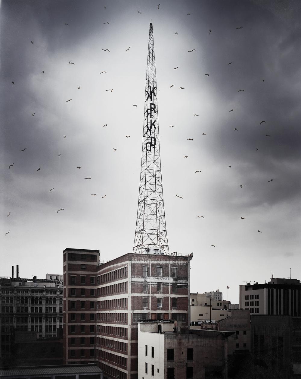 antenae birds.jpg