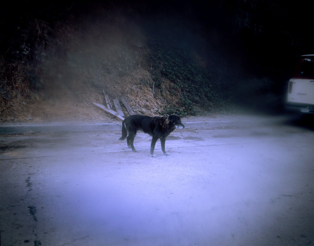 triste perro negro.jpg