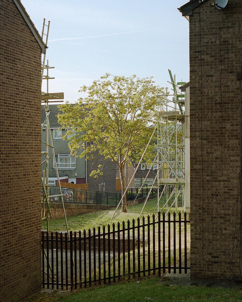 Trees between houses INSTA.jpg