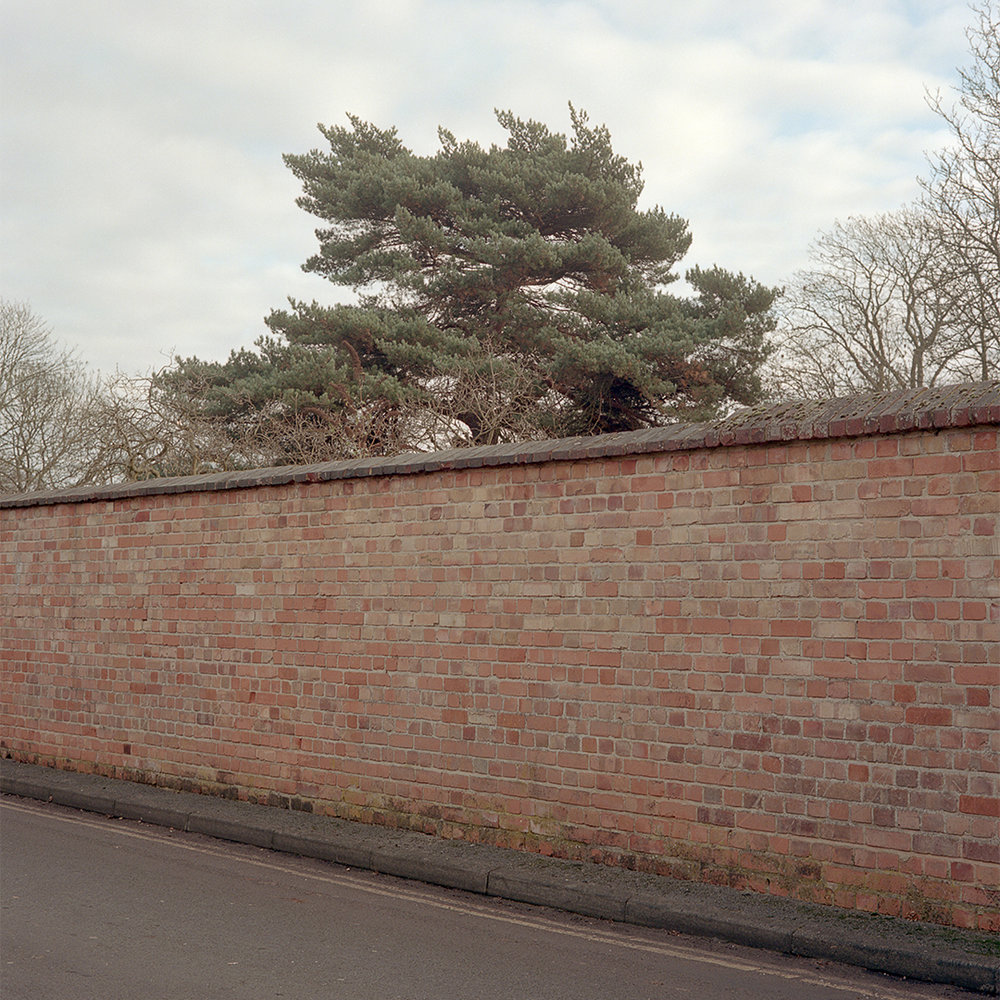 INSTA Tree behind wall_120_Colour_Roll 3_003.jpg