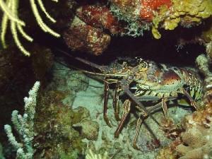 lobster-300x225.jpg