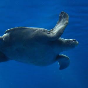 Open Sea Life Cam