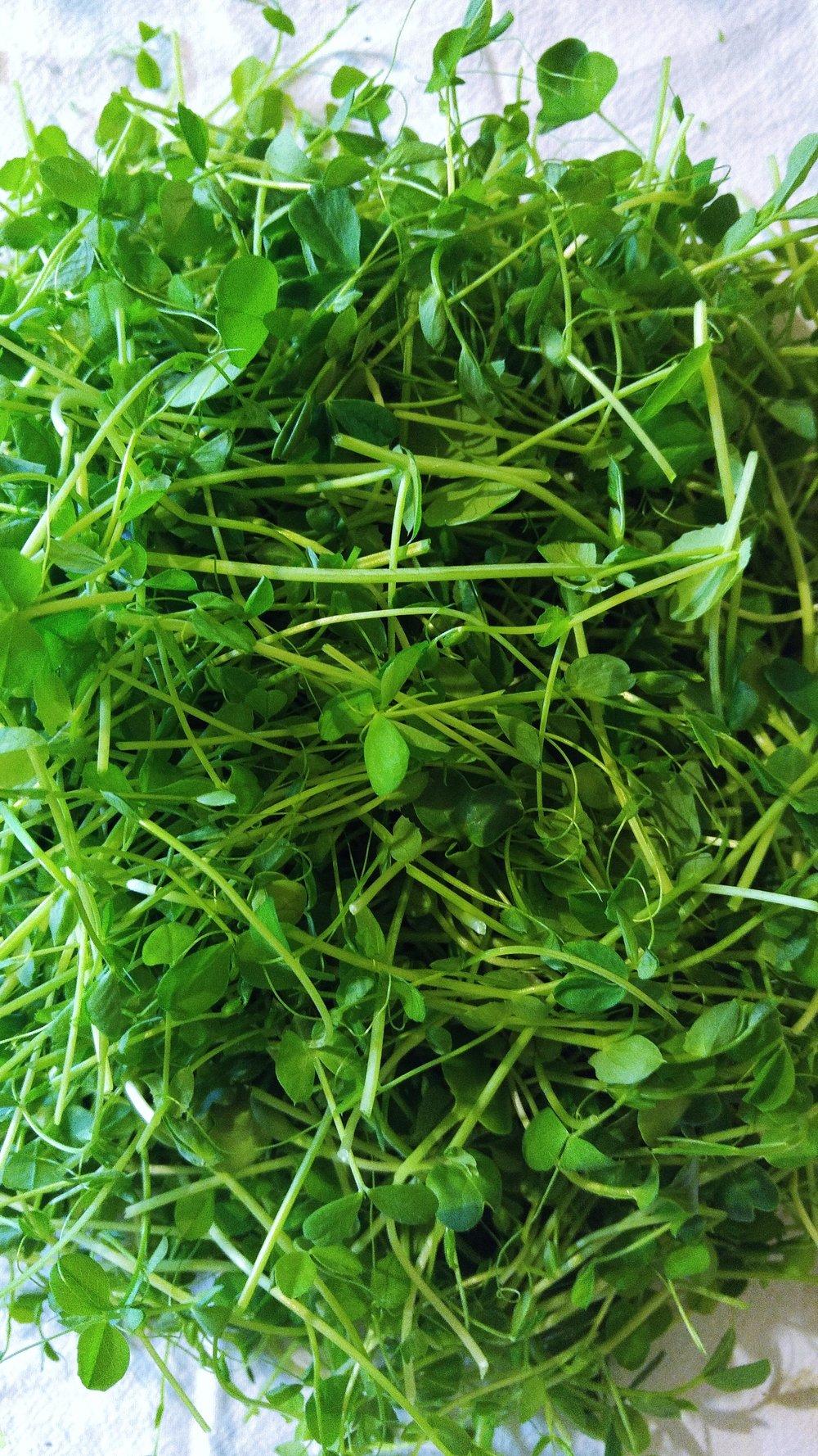Get Your Microgreens.jpg