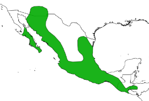 Distribution of  Leptonycteris yerbabuenae