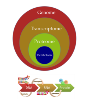 The ' Omic'  technologies are aimed at the detection of genes and have a broad range of applications.
