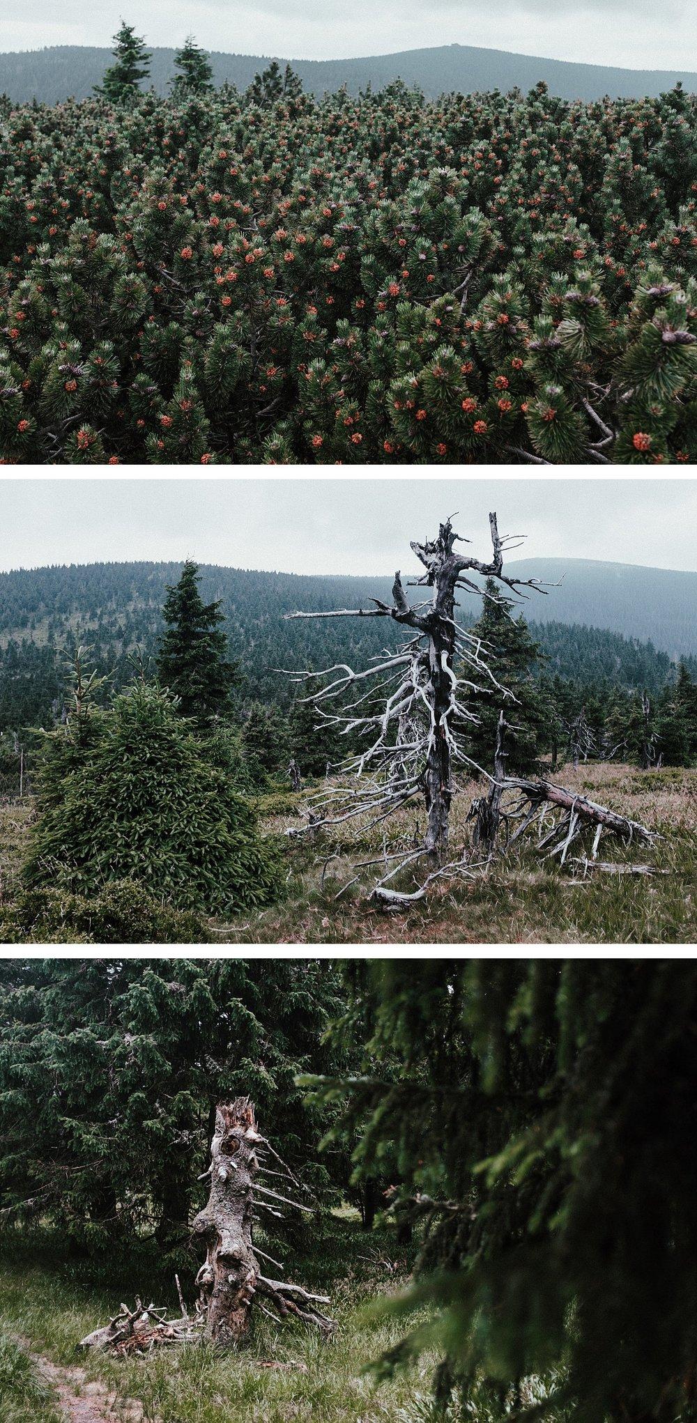 2018-06-20_0048.jpg