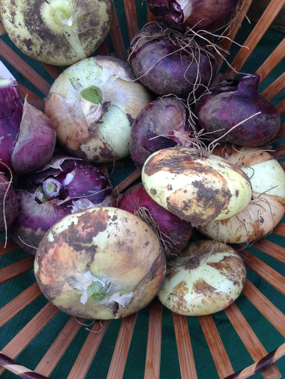 purple and white onions in a basket