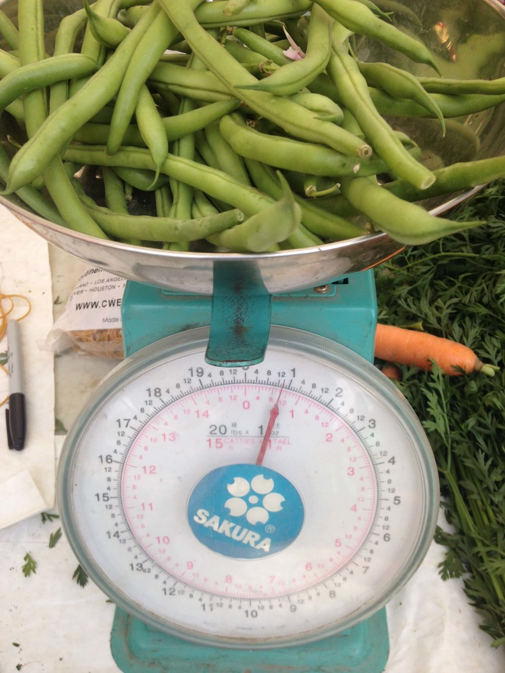 Sugar Snap Peas on Scale. Weighing out foods can be helpful following weight loss surgery.