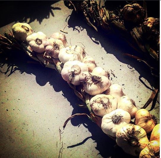 String of garlic the heart health promoter