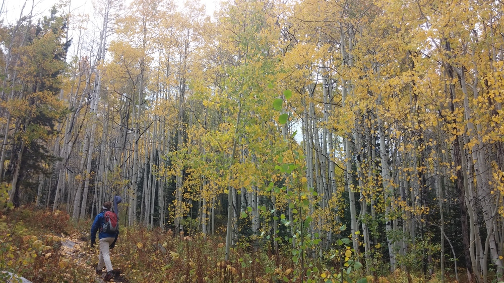 Hiking in the Colorado Aspens.