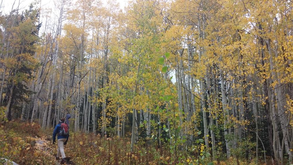 Hiking in the Colorado Aspens.