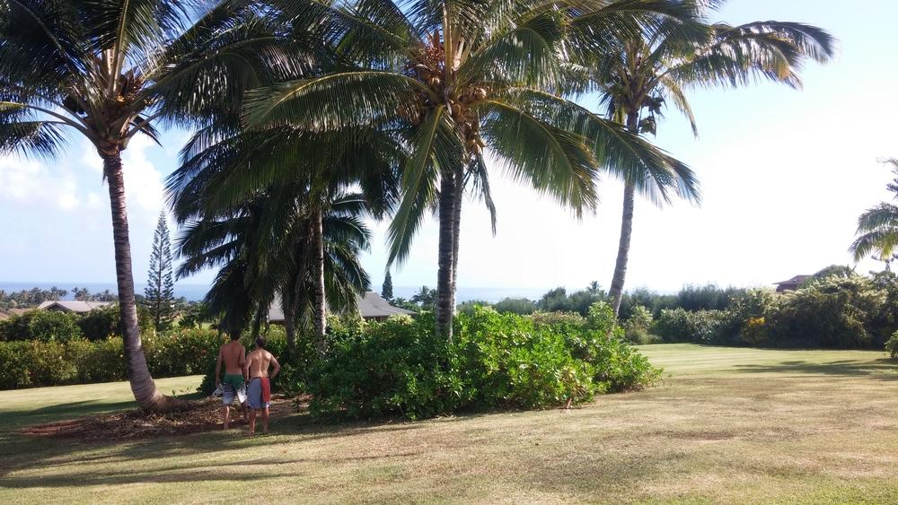 Lucas and Adam checking the coconut racks.