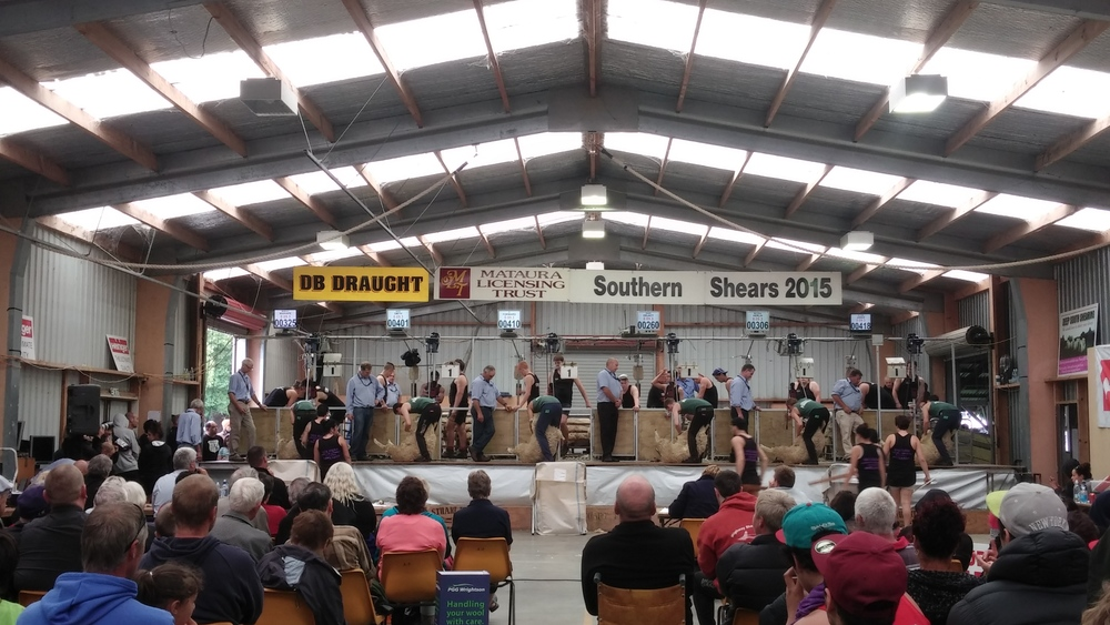 Almost got to shear a sheep and be shed hands. We'll take seeing the best shearers in the world instead!