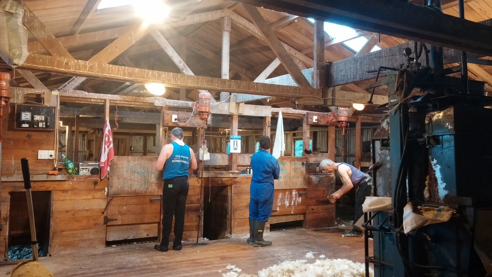 Robbie and Matt prepping their shearing gear in the wool shed.