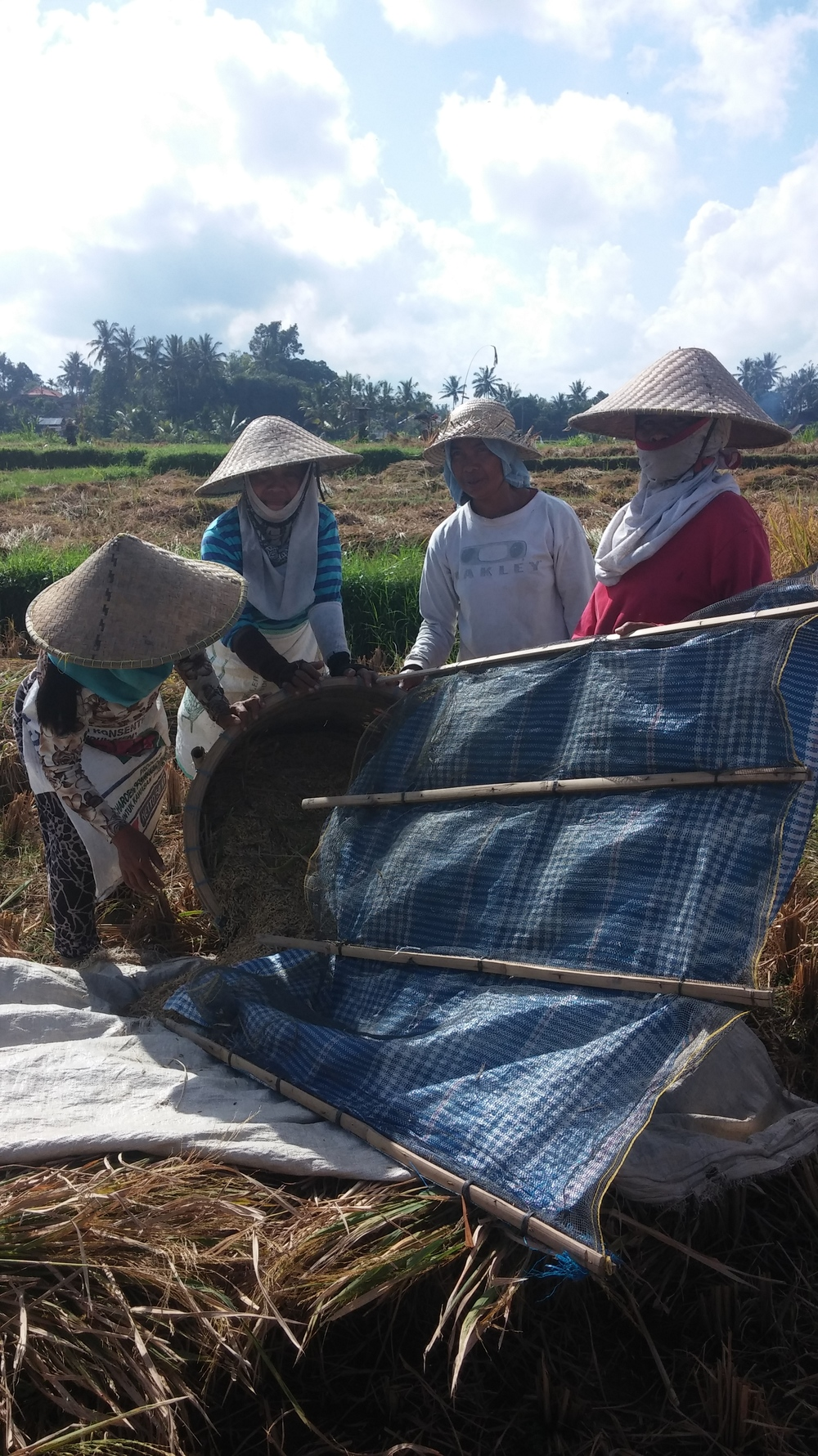 Once the basket is full, the ladies pour the rice onto a tarp to haul the rice back to the house to dry out in the sun. The beaten stalks are tossed to the side to be burned later in preparation for the next rice planting.