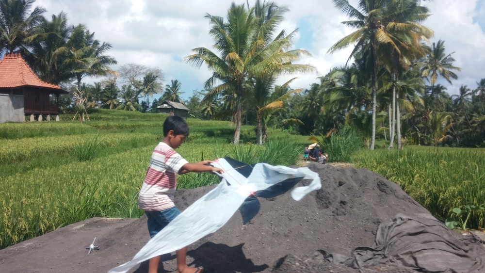 It's kite flying season on Bali. The wind is just right, so all the kids build their own kites and fly them over the rice paddies. He's on his way!