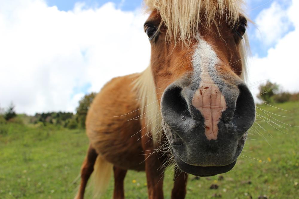 Wild Ponies Grayson Highlands State Park
