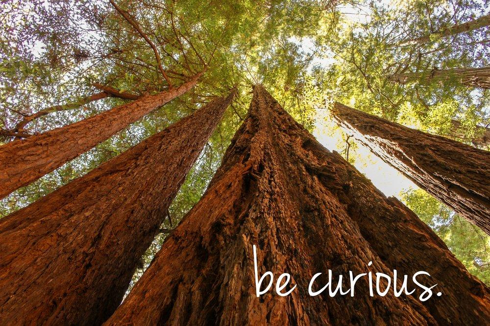 Be Curious.