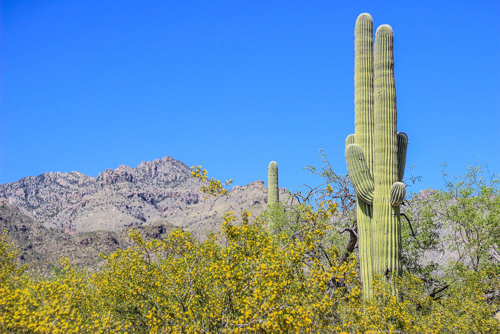 Sabino Canyon, Saguaro Cactus, Tucson, Arizona, Desert, Santa Catalina Mountains, Things to Do in Arizona, Coronado National Forest