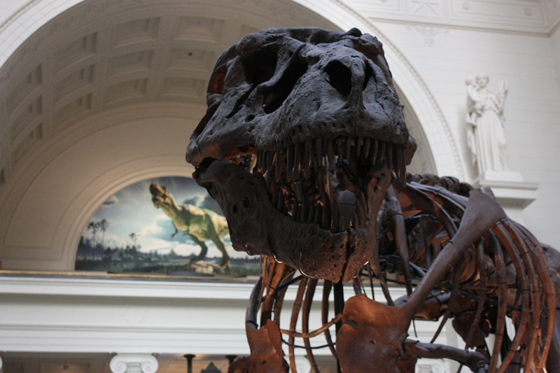 Investigative piece about a Field Museum employee accused of embezzling over $900,000 from the museum. (Chicago Tonight)