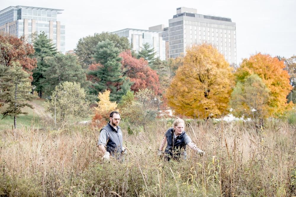 forest park 1515.jpg