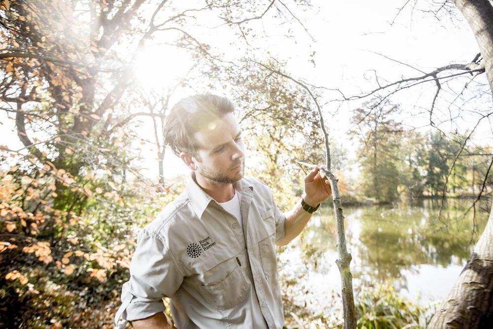forest park forever pruning web.jpg