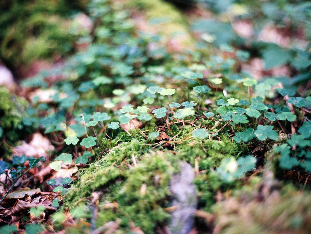 Ireland_451.jpg