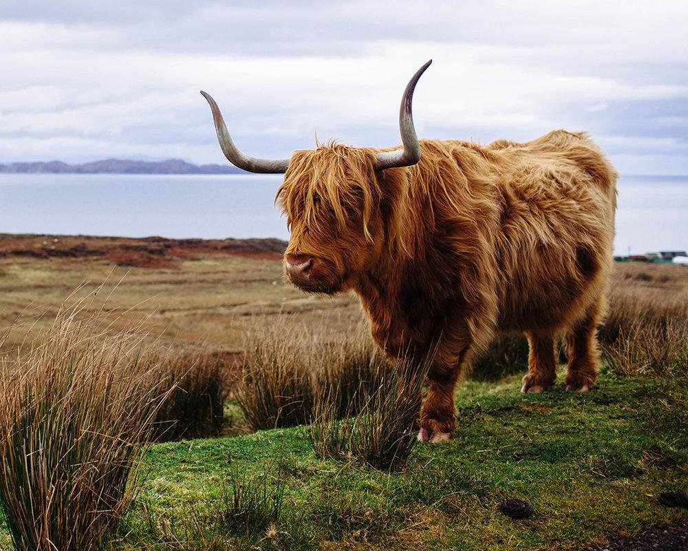 Scotland Fall 2016_0089.jpg