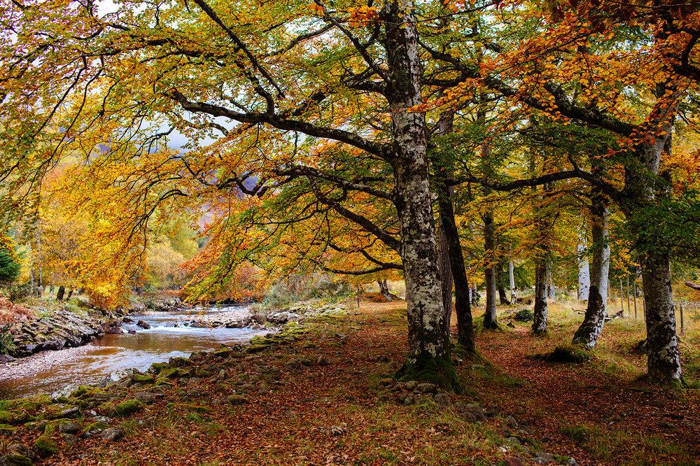 Scotland Fall 2016_0105.jpg