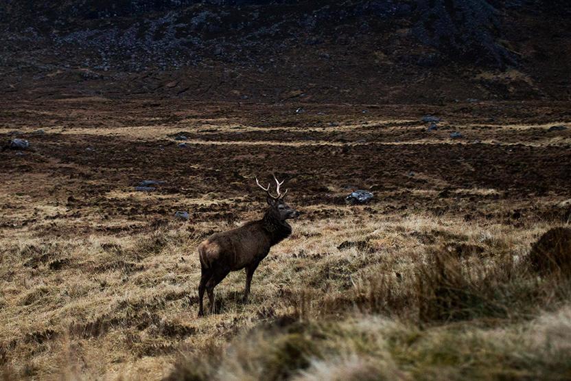 Scotland 2017_0250.jpg