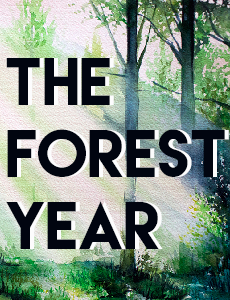 Forest-Year.png