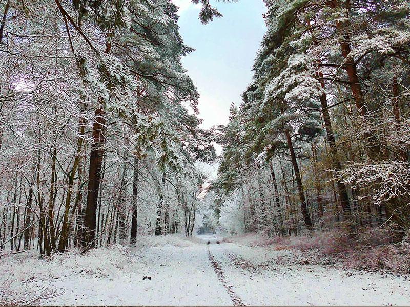 WinterGallery800x600.jpg