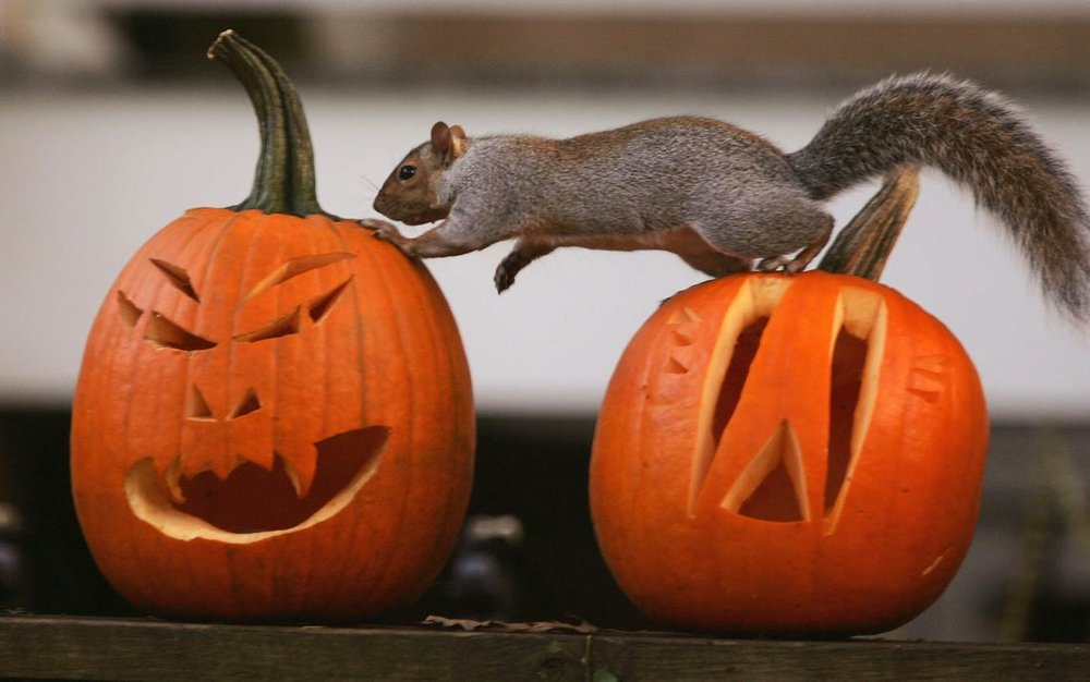 HalloweenNPR.jpg