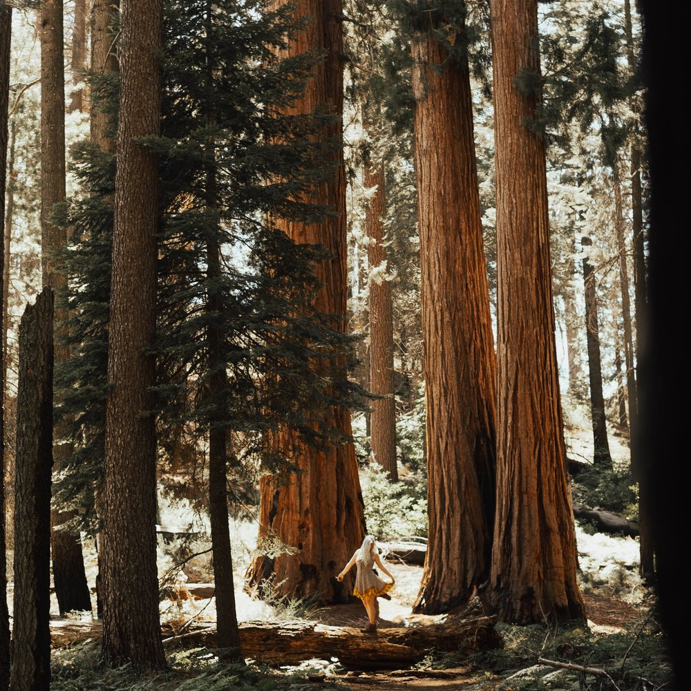 California - We took the bus all the way from Ohio to California, camped in the Sequoias, hiked mountain peaks in Yosemite, and much more.