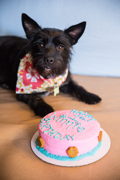 California Pet Bakery - Animal Lover's Bakery Bakersfield, California