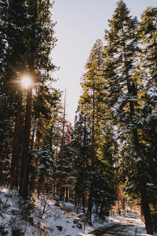 Archer Inspired Photography Family Road Trip Lifestyle Photos NorCal Sacramento South Lake Tahoe Reno Truckee Documentary Memories-58.jpg