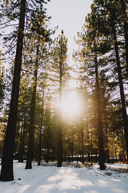 Archer Inspired Photography Family Road Trip Lifestyle Photos NorCal Sacramento South Lake Tahoe Reno Truckee Documentary Memories-115.jpg